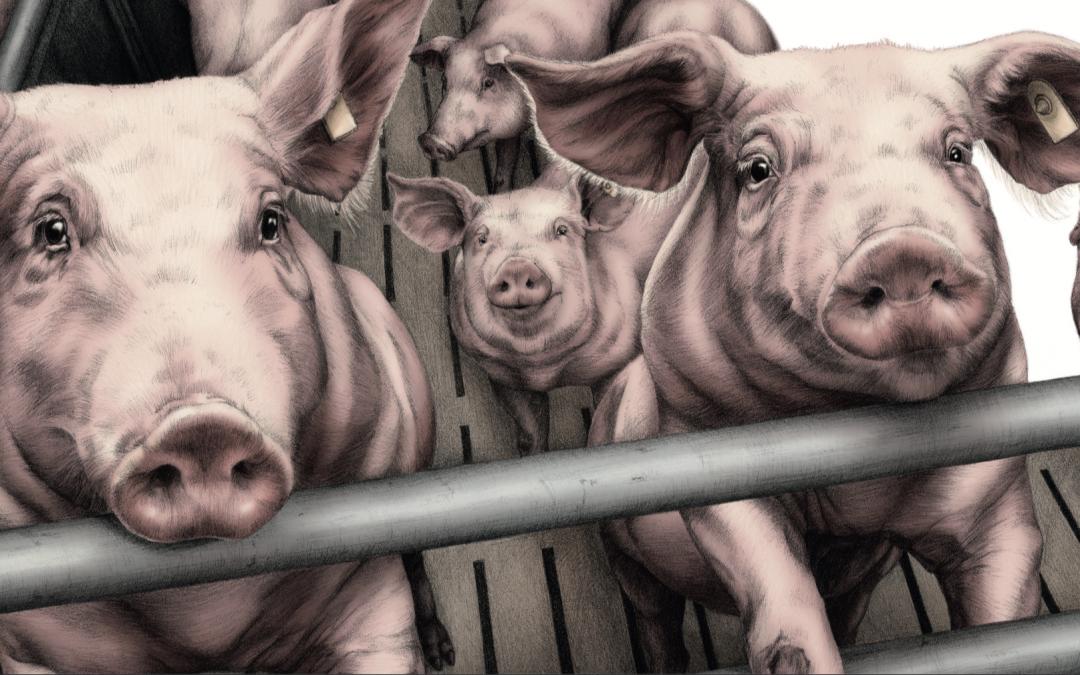 Buchvorstellung: Bauernhoftiere von Lena Zeise